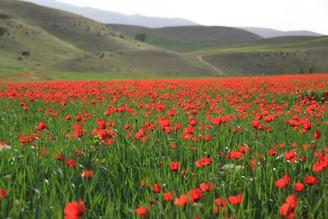 Dans les montagnes de l'Azerbaïdjan iranien