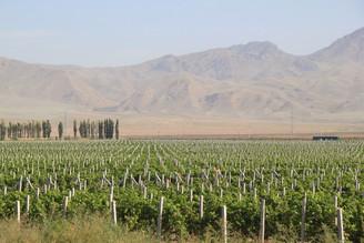 Vins et vignobles du Xinjiang