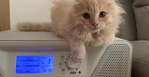 貓貓也愛Airgle空氣淨化機