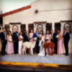 Happy wedding day_#alpacawedding