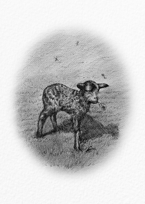 Black Sheep Series: One