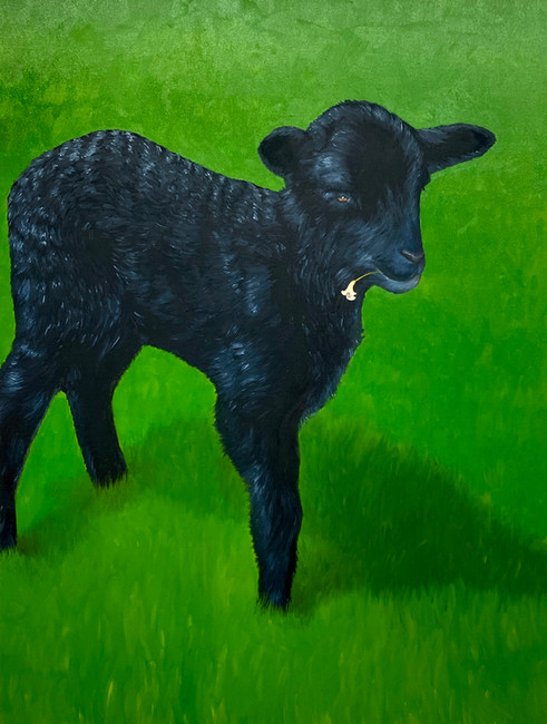 The Black Sheep with a Lily
