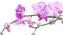 цветение.png