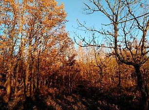 Con gusto de Valdavia Miel natural propia de brezo y roble procedente de la montaña palentina