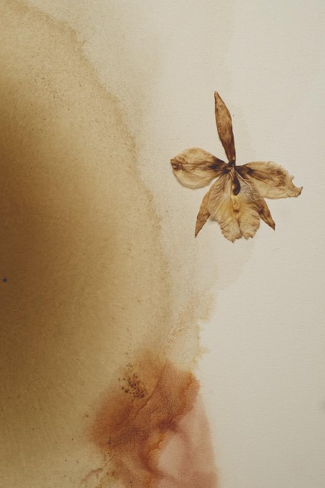 Herbarium XIII