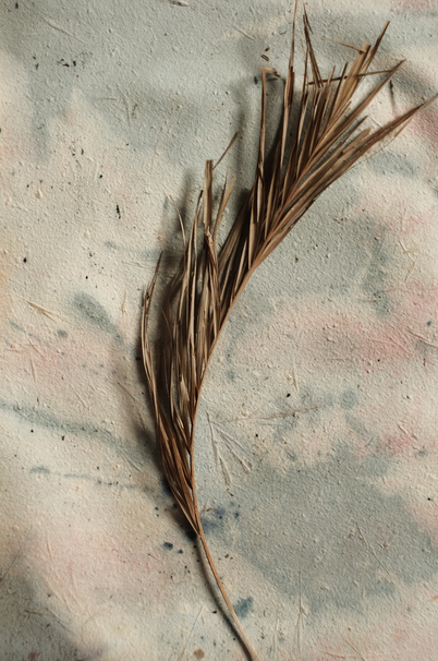 Herbarium III