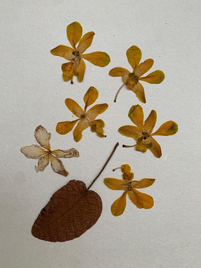 Herbarium XII