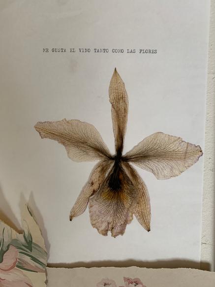 Herbarium VIII