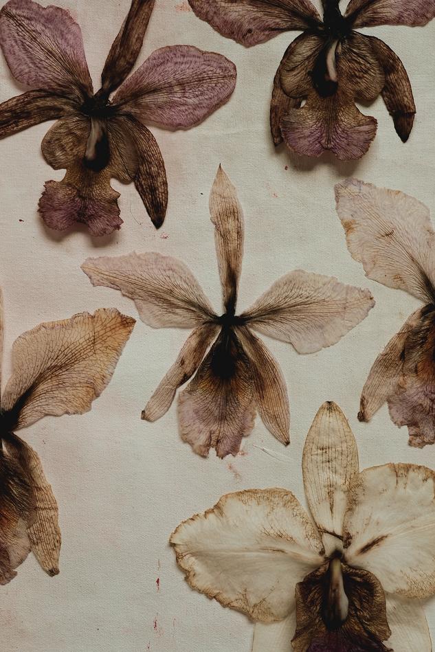 Herbarium IV