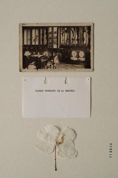Herbarium X