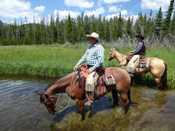 horses in creek 2