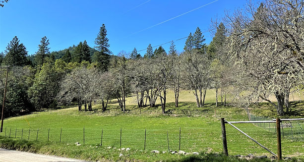 3995 humbug more pasture.jpg