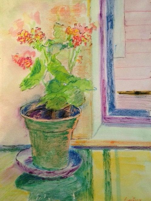 Begonia--Sold