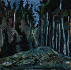 Summer Nocturne, Lazo Evergreens