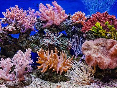 Un arrecife de coral colorido.