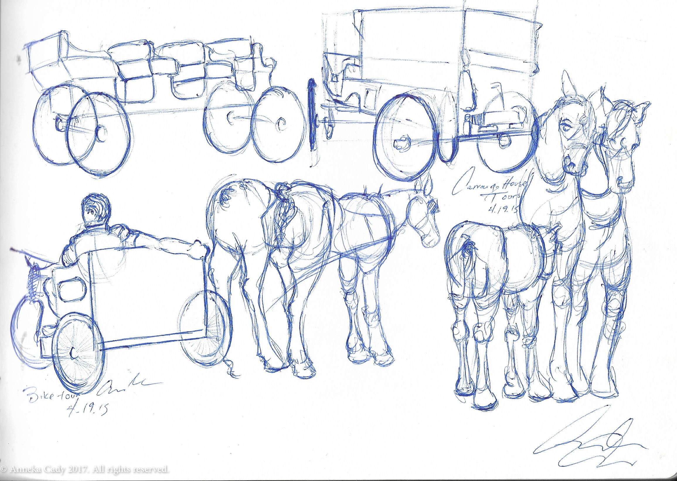 Horse Study 02