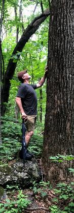 craig w tree.jpg