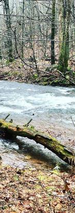 cow creek.jpg