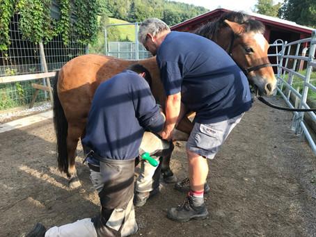 Pedicure für die Ponys