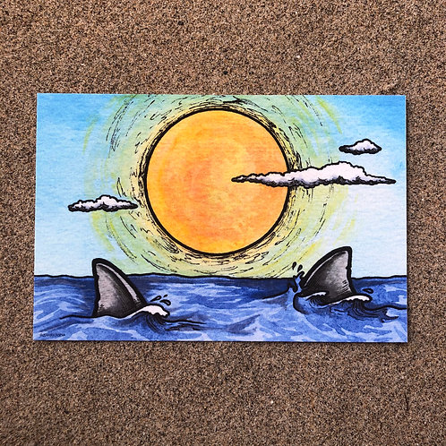 4x6 Print - Sunlight and Shark fins
