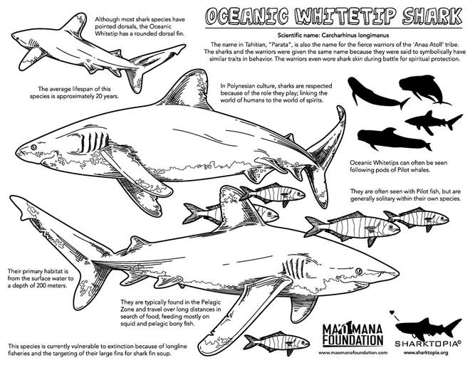 oceanicwhitetip-eng.jpg