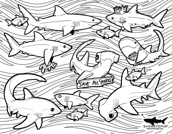conservation-saveallsharks.jpg