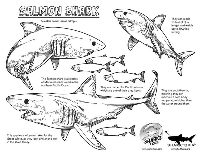facts-salmonshark.jpg