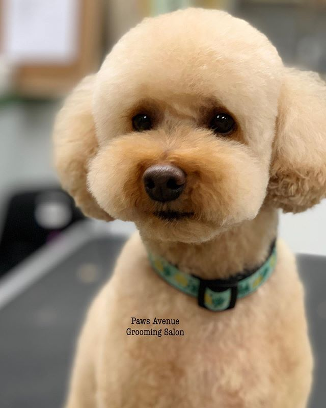 Timbit🧁__#asianfusiongrooming_