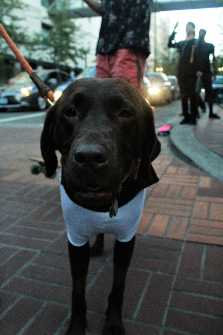 Protest Pup