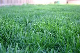 Grass #4