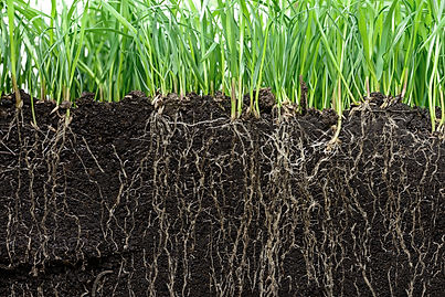 grass with roots and soil.jpg