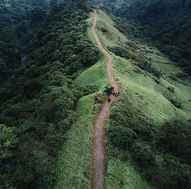 paysage de jungle - campagne beinfluence