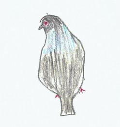 Pigeon - 2020