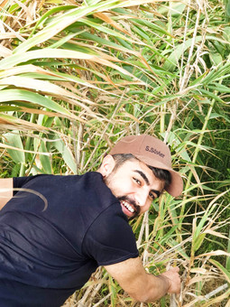 Reed field, Samandag - Hatay