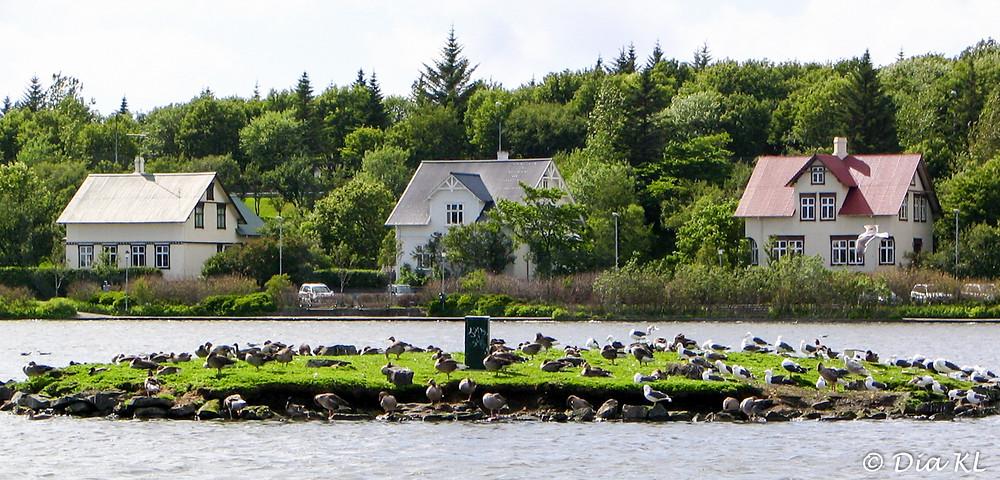 Birds at Tjornin, the city pond, Reykjavik, Iceland 2006