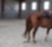 Cours équitation western