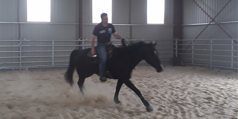Stage Equitation Western
