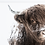 Thumbnail: WINTER Highland Cow