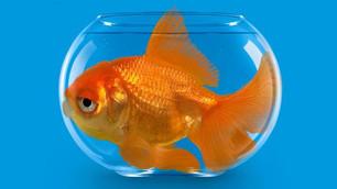Em que aquário você vive?