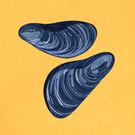 Mussel Flex