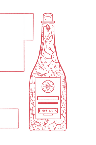 Red Wine Drinkers/Gut Bacteria