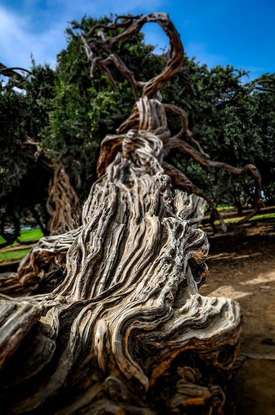 Tree Trunk, California