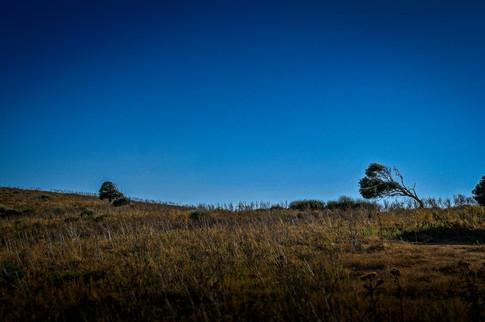 Bending Trees, Corsica