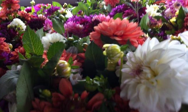 Dahlias Ready for Market