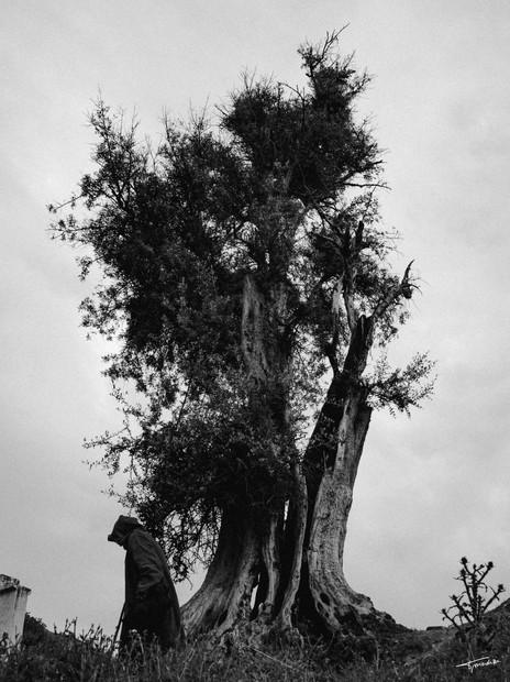 L'arbre des sages