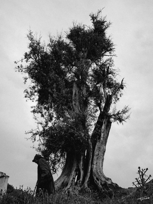 L'arbre des sages.jpg