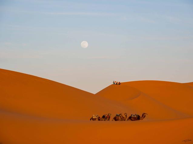 Camel de Lune