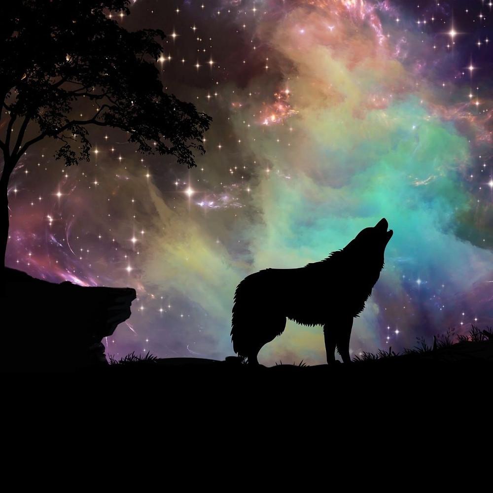 chant du loup - lune du loup . photo canva. @blaciynhaa blaciy nhaa