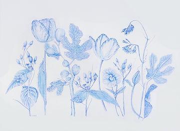 Botanical 1  Stacey Cushner  blue pencil