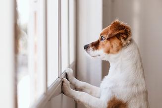 Sep anx dog.jpg